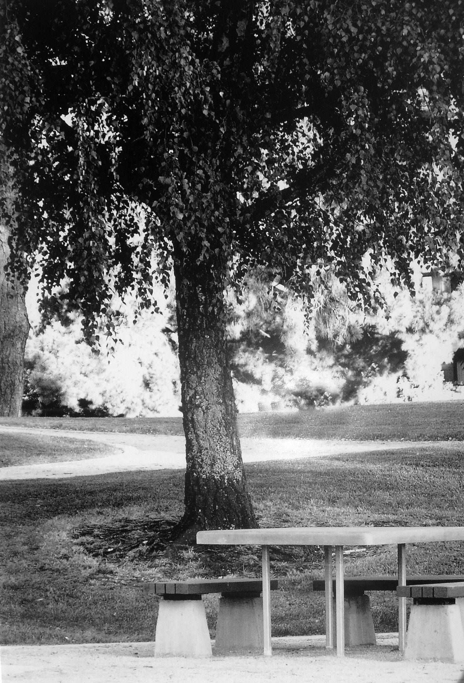 The picnic table in a Palo Alto park, where Eastside College Preparatory Academy's first classes were held in 1996.