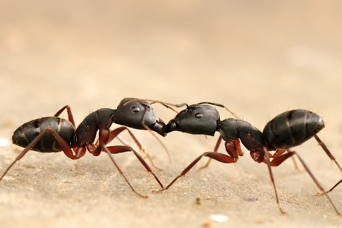 stanford u0027s u0027ants in space u0027 study launches citizen science for