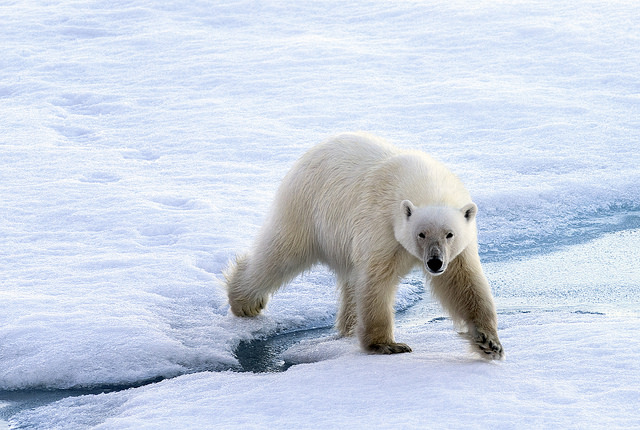 Climate Change Inaccurately Portrayed In Textbooks Stanford