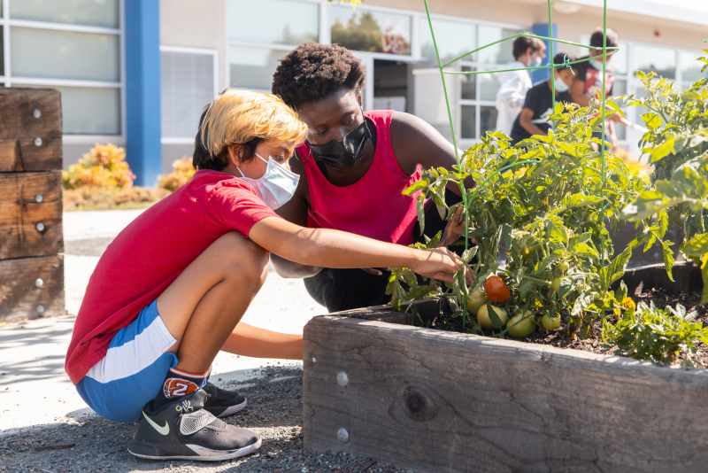 """To help ease the re-entry into school life, Lakewood students participated in """"passion projects"""" such as tending a vegetable garden in the school courtyard. (Photo: Andrew Brodhead)"""